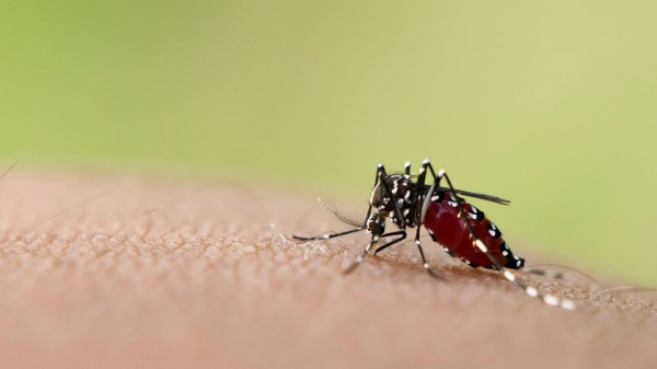 aedes-mosquito-sucking-blood-on-skin_5501027