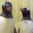 Voici le couple de pingouin gay le plus célèbre au monde