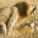 Le Danemark veut interdire la zoophilie