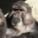 Des injections d'antirétroviraux contre le sida sur des singes
