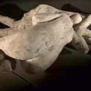 Les amants de Pompéi étaient deux hommes !
