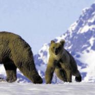 L'interdiction du mariage homo en Alaska jugée anticonstitutionnelle