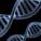Deux gènes identifiés liés à l'homosexualité ?